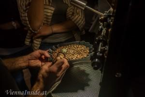 Mit einer kleinen Schaufel werden zur Kontrolle einige Bohnen entnommen.