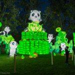 """Pandabären, auch """"lebende Fossilien"""" genannt, gibt es weltweit heute nur noch etwa 1600 Stück. Mehr als 80% davon leben in Sichuan. Daher wird Sichuan auch die Heimat der Pandabären genannt. Der Pandabär ist auch das Wappentier Chinas."""