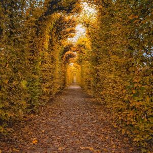 Golden autumn in Vienna magical moments and awesome colors Viennahellip