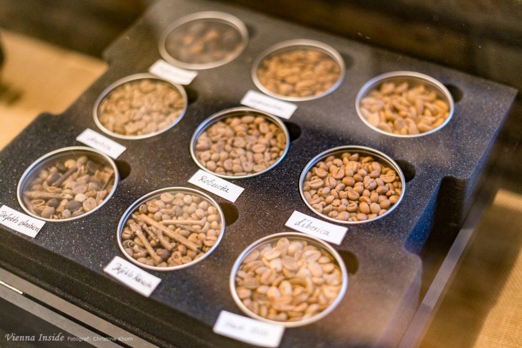 Eigentlich gibt vierzig verschiedene Sorten Kaffeebohnen aber nur 3 Sorten kommen tatsächlich in den Handel. Den größten Anteil mit 60 Prozent des Welthandels nimmt die  Arabica-Bohne ein. Sie wächst vor allem im Hochland zum Beispiel in Brasilien, Kenia und Kolumbien. Die Bohne ist grünlich bis blaugrün, oval geformt und etwa 9 mm lang. Erkennbar ist sie an der geschwungene Naht. Dann gibt es noch den Liberica-Kaffee der allerdings im Vergleich zu  Robusta und Arabica von geringer wirtschaftlicher Bedeutung ist. Zu den Anbaugebieten zählen Liberia, Sierra Leone, Zentralafrikanische Republik, Benin, Philippinen, Indonesien und Vietnam.