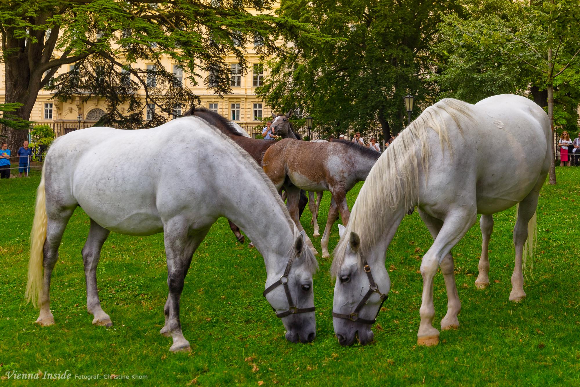 Grafenegg exklusive partnervermittlung: Dominate sie sucht ihn